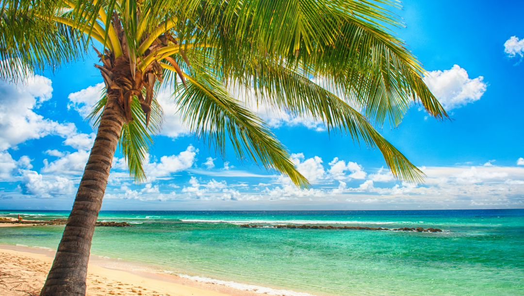 ocean,summer,paradise,tropical,sunshine,vacation,palms,beach