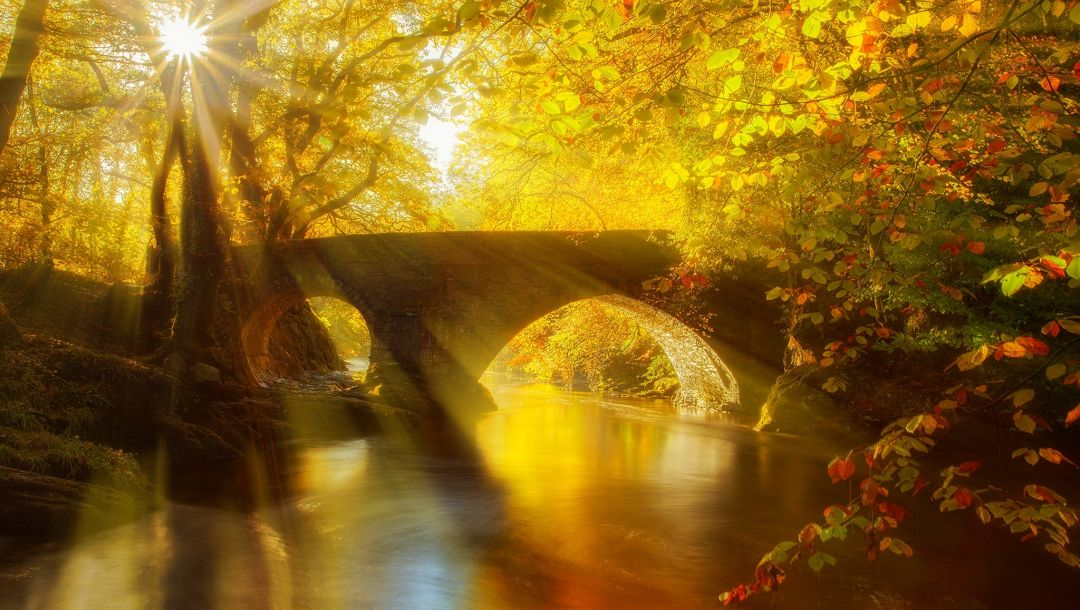river,forest,autumn,view,fall,park,water,bridge,trees,leaves,alley,walk