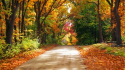 Road,autumn,fall,path,leaves,trees,walk,colorful,colors,forest,park