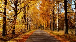 colorful,Road,path,fall,nature,walk,autumn,park,colors,leaves,trees,листья,forest