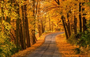 path,park,autumn,colors,fall,leaves,Road,colorful,walk,forest,trees