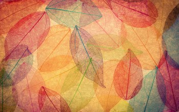 leaves,Abstract,transparent,осенние,autumn,colorful