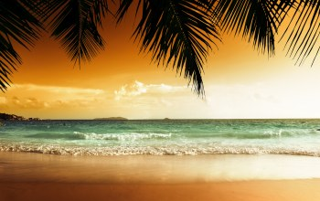 tropical,ocean,palms,beach,paradise,Sunset
