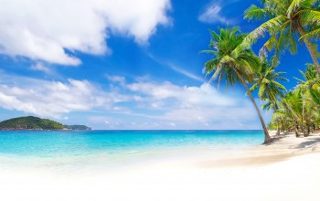 tropical,summer,beach,palms,sand,shore,paradise