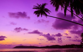 Sunset,tropical,ocean,paradise,beach,palms,Purple