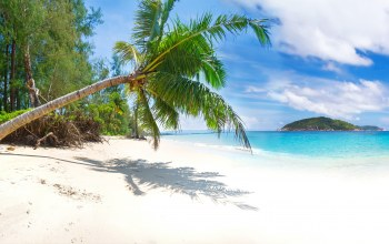 tropical,paradise,beach,palms,summer,sand,shore