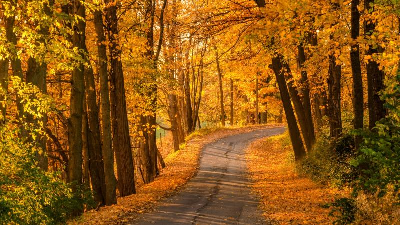 path,park,autumn,colors,fall,leaves,листья,Road,colorful,nature,walk,forest,trees
