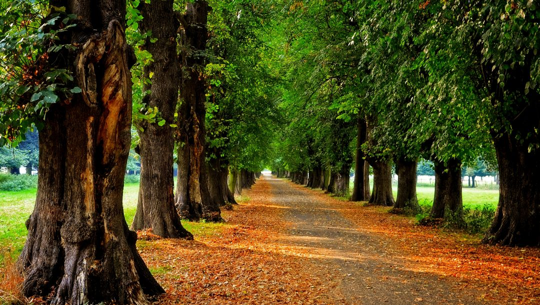 leaves,colors,Road,trees,autumn,park,forest,walk,path,fall,colorful