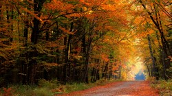 walk,forest,autumn,colorful,park,colors,leaves,Road,path,trees,fall