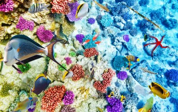 подводный мир,reef,World,underwater,ocean,fishes,coral,tropical