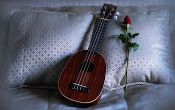 pillows,rose,Ukulele,love song