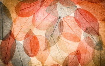colorful,осенние,autumn,leaves,Abstract,transparent