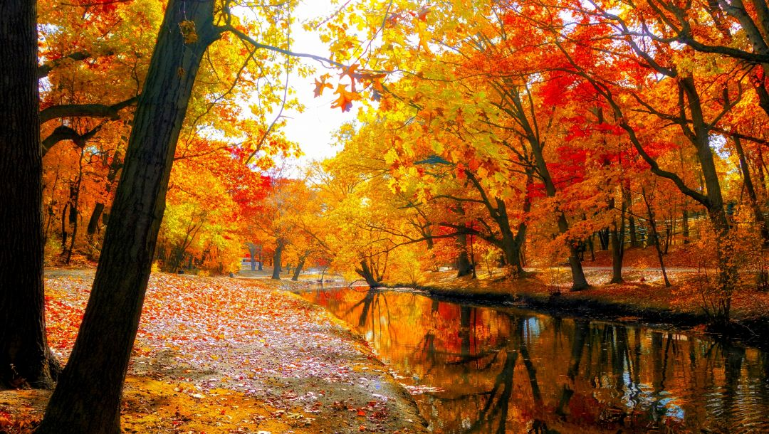 leaves,park,fall,sky,colorful,walk,forest,river,trees,colors,water,autumn