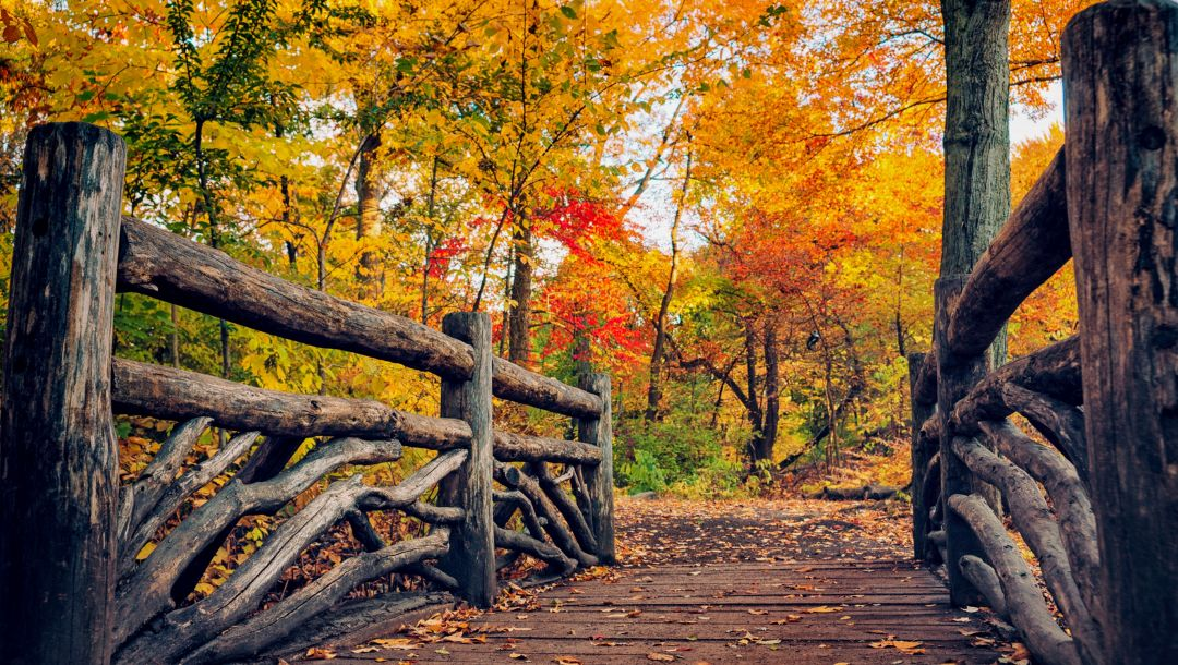 forest,path,leaves,trees,walk,Road,colorful,colors,autumn,fall,park