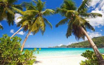 tropical,paradise,summer,palms,shore,sand,beach