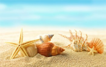 Seashells,sunshine,starfishes,summer,beach,sand,ракушки