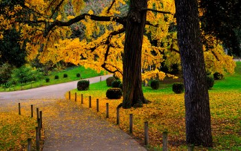 leaves,autumn,colorful,path,park,walk,forest,trees,fall,Road,colors
