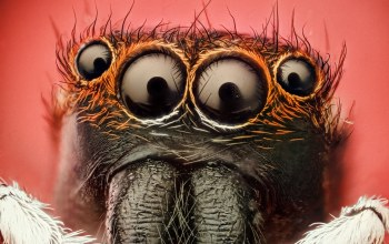insect,eyes,Spider