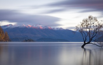 новая зеландия,Lone tree,озеро уанака,new zealand,lake wanaka