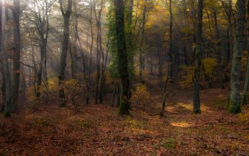 leaves,sunshine,trees,lazio,italy,forest,manziana