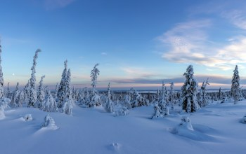 finland,forest,snow