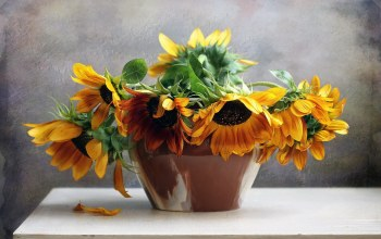 flower,sunflowers,Bouquet,still,life
