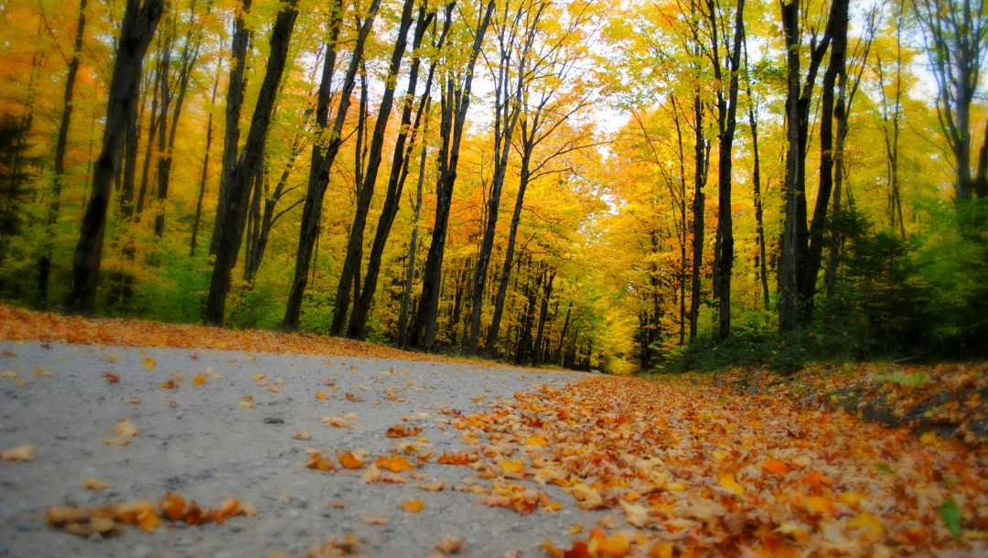leaves,forest,trees,park,fall,colors,Road,walk,autumn,colorful,path