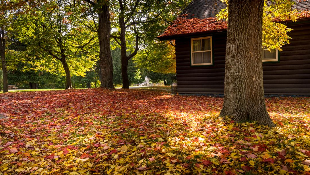 park,trees,colors,house,autumn,forest,walk,colorful,bench,leaves,fall