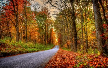 leaves,walk,colorful,forest,park,trees,fall,Road,path,autumn,colors
