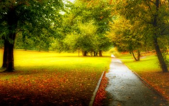 walk,park,fall,forest,Road,path,trees,autumn,colors,leaves,colorful