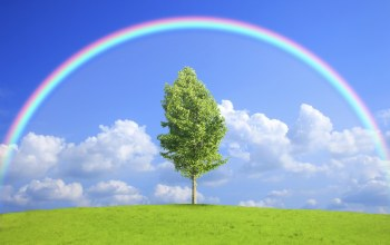 field,tree,rainbow