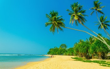 paradise,tropical,palms,summer,beach,sand,shore