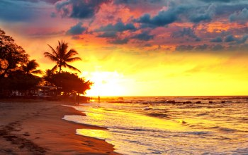 paradise,тропики,beach,tropical,palms,Sunset