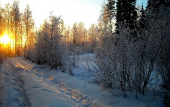 White,beautiful,sky,winter,Пейзаж