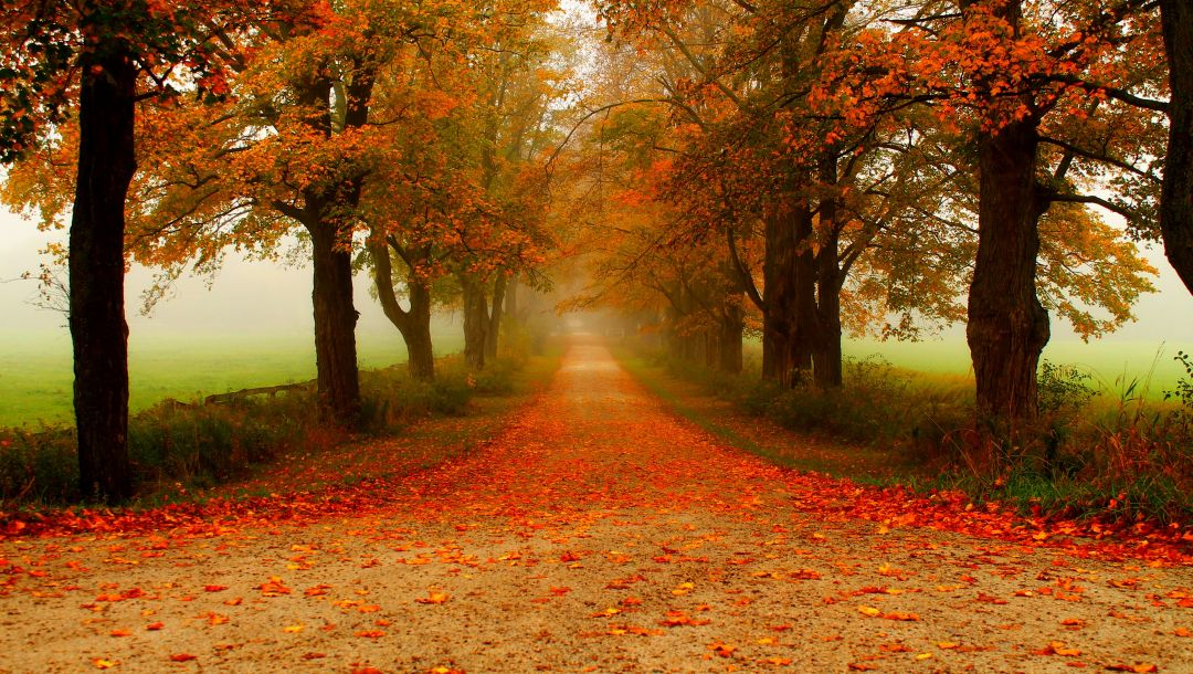 trees,colors,walk,forest,colorful,path,Road,park,leaves,autumn,fall
