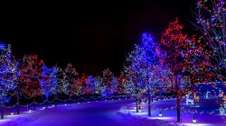 street,winter,holiday,merry christmas,lights,snow,nature,trees,night,Happy new year