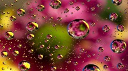 colors,bubbles,background,colorful,Abstract,Floral,фон,пузыри,абстракция