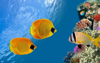 ocean,reef,underwater,fishes,tropical