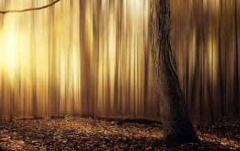 warm,yellow,tree,leafs,forest,Abstract