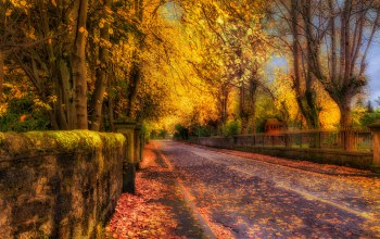 trees,colors,leaves,autumn,path,colorful,park,fall,Road,forest,walk
