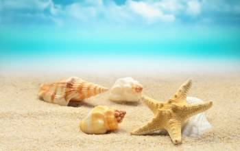 sand,starfish,Seashells,blue,summer,beach