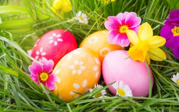 яйца,happy,eggs,Весна,decoration,Easter,spring,цветы