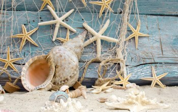 ракушки,Marine,starfishes,beach,Seashells,wood,sand