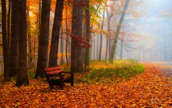 colors,bench,park,autumn,walk,trees,Road,leaves,grass