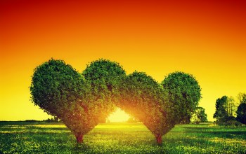 сердце,heart,tree,Sunset,Любовь
