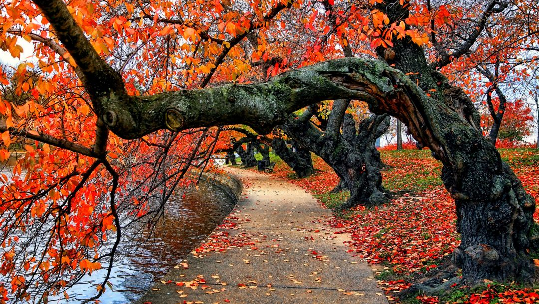 autumn,colorful,park,fall,leaves,walk,colors,river,bench,water,trees