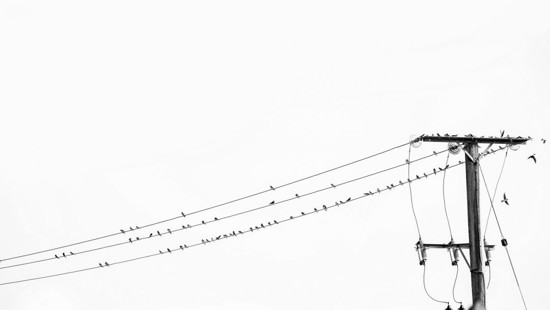 Birds on a wire,black and white,high voltage