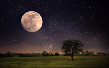 beautiful scene,stars,landscape,lonely tree,sky,landscape,full moon