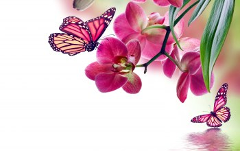 beautiful,reflection,цветы,water,butterflies,орхидея,Orchid