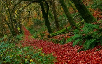 национальный парк эксмур,Buckethole woods,Exmoor national park,england